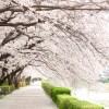 東京の桜の隠れた名所とは?ぼっちにもおすすめの穴場はここ!