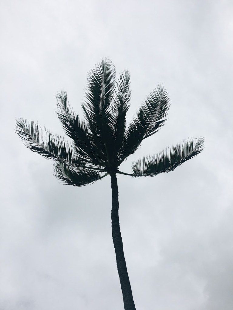 silhouette palm tree hawaii