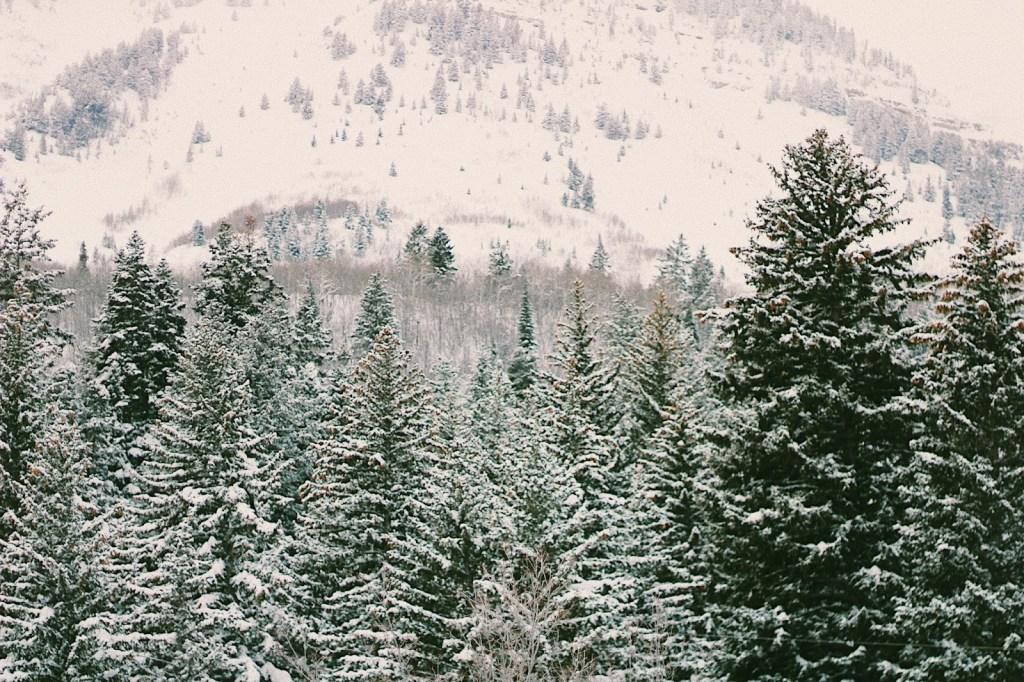 pines in sundance resort