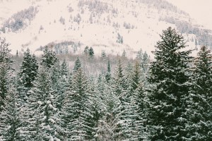 content creation vsco sundance winter