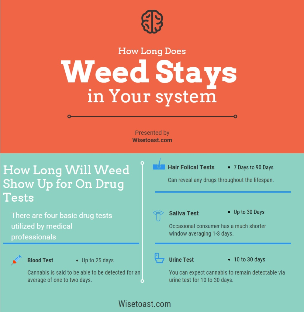 How Long Does Weed Stay in Your System Urine Blood