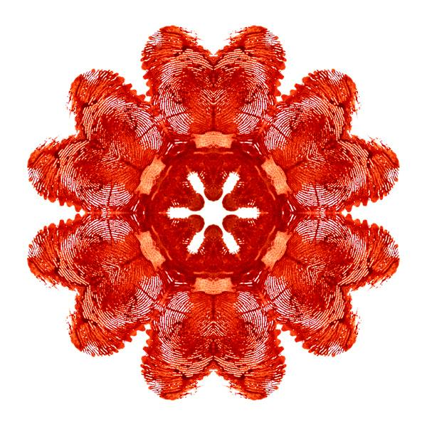 Mandala made of moon blood symbolizing menstrual health