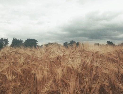 Letní pole