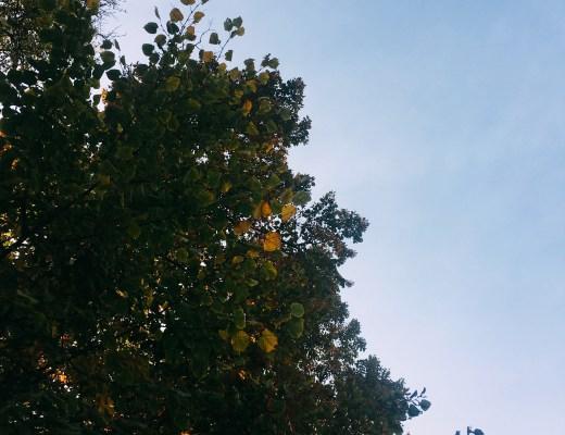 Podzimní nebe