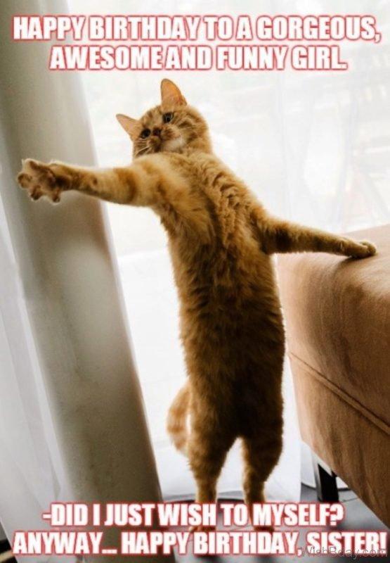 Happy Birthday Kitten Images : happy, birthday, kitten, images, March, Happy, Birthday, Daily, Kitten
