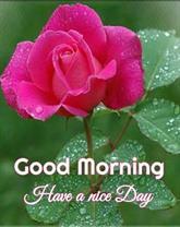 Morning Love You Meme : morning, Morning, Images, Wallpaper