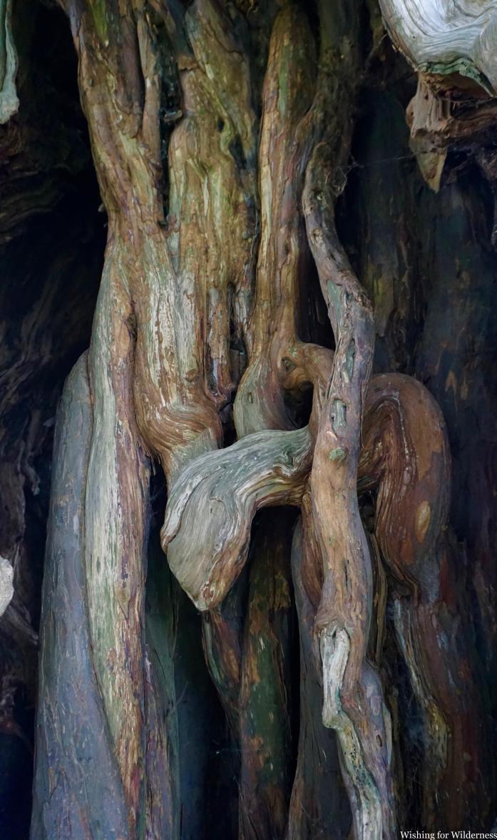 Inside a tree