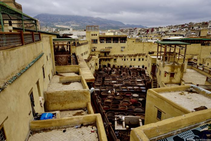 Fes tannery from above