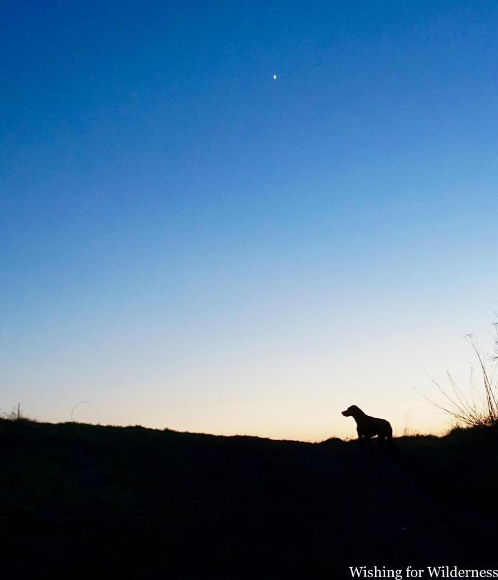 Dog silhouette at sunset at home