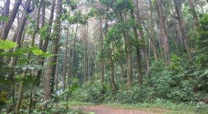 Hutan menjelang lokasi