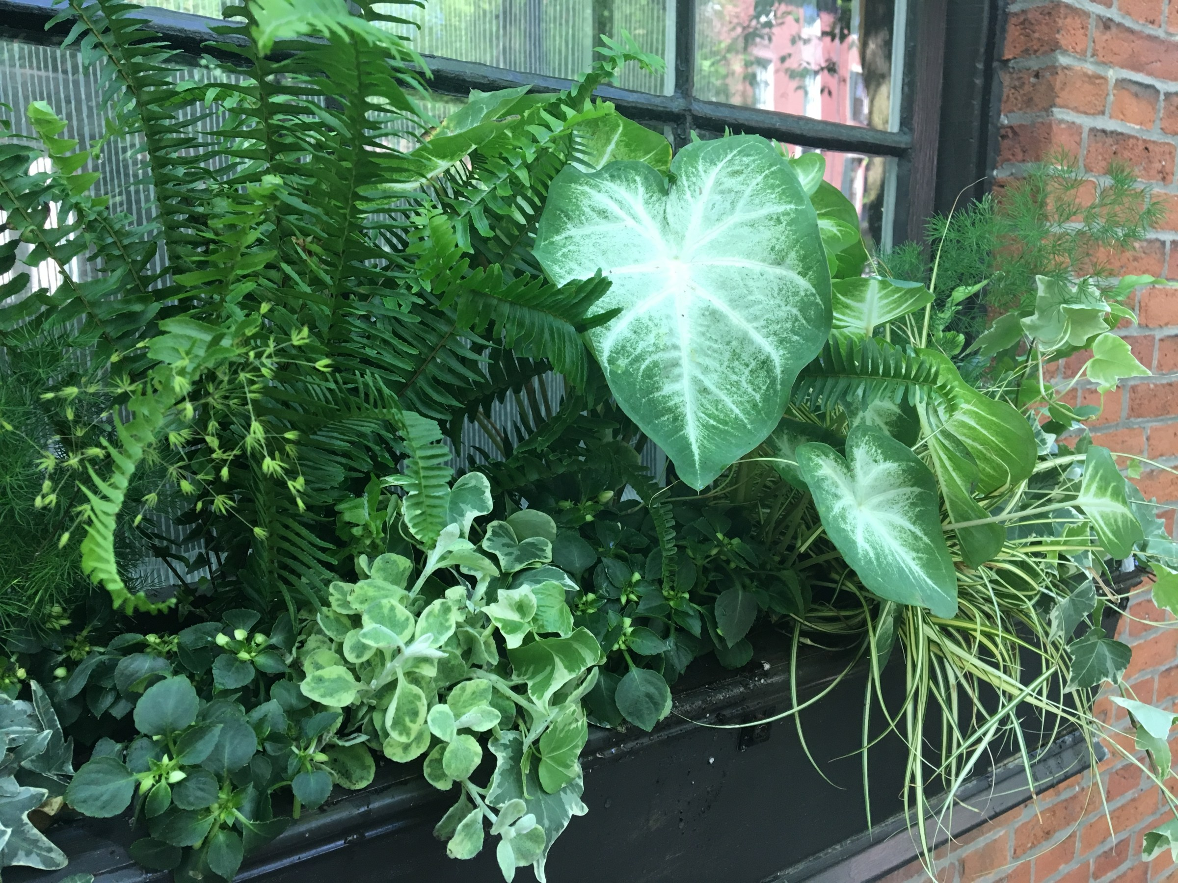 window boxes and container gardens