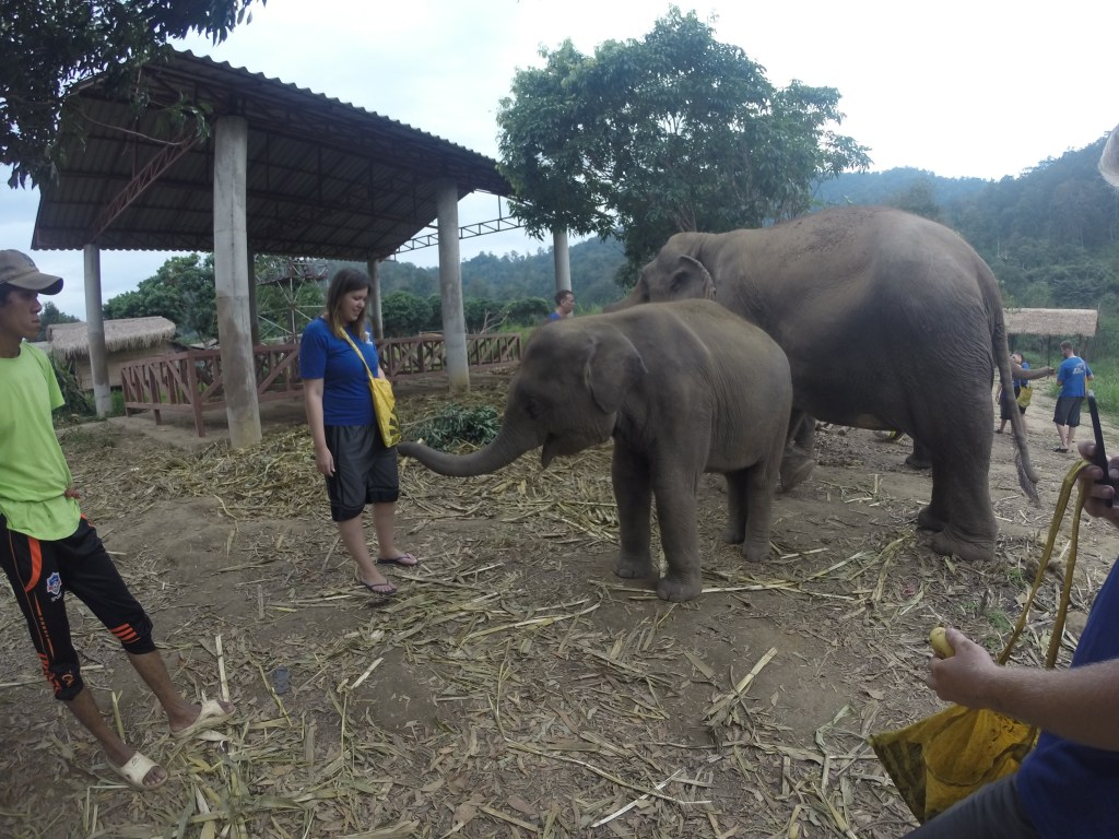 GoPro image of baby and adult elephant at Chiang Mai Mountain Sanctuary in Chiang Mai, Thailand