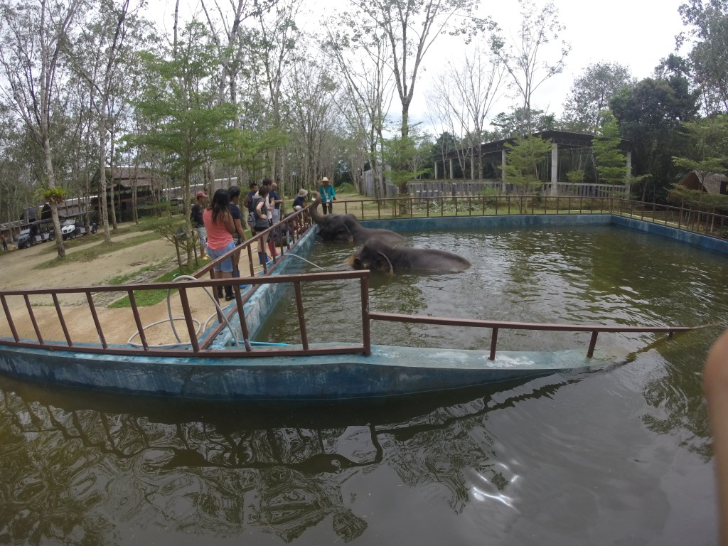 Wide shot of elephant pool at Phuket Elephant Sanctuary in Phuket, Thailand