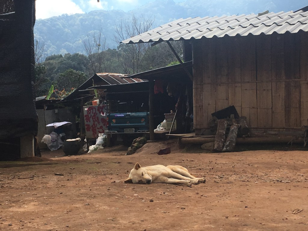 Sleepy dog resting on the ground near house at hill tribe village in Chiang Mai, Thailand