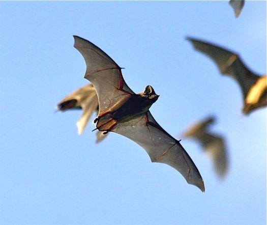 bats4