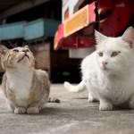 保護猫のトライアルが失敗するケースってどんなとき?