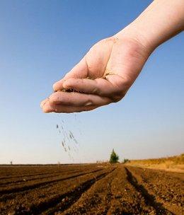 Planting_seeds