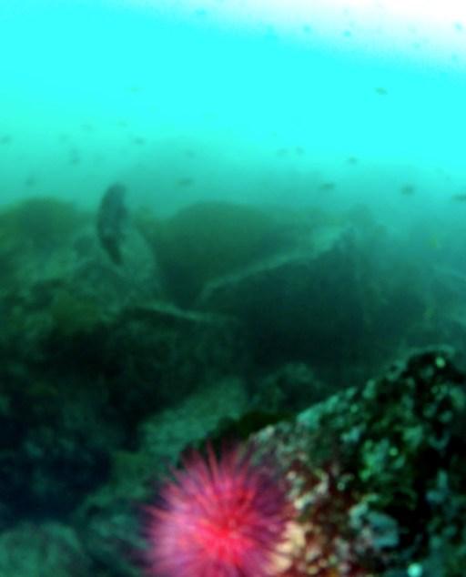 Diving in Victoria in November