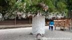 06jul15-019-japan-honshu-shimane-izumo-taisha-shrine