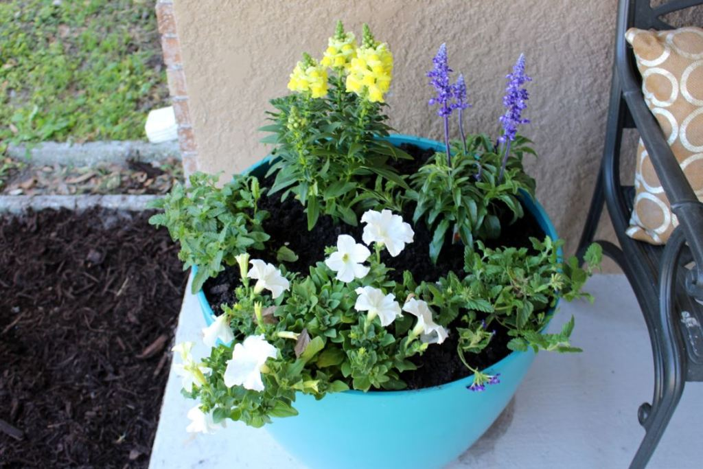 Adding a pop of color in flower pots