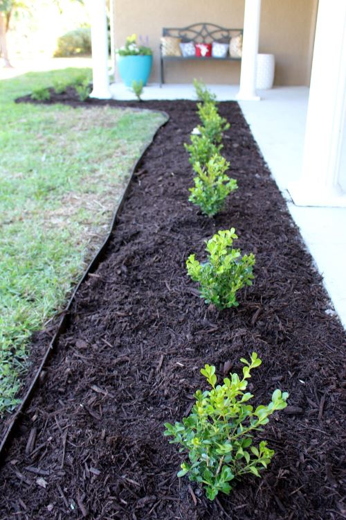 home project front porch landscaping