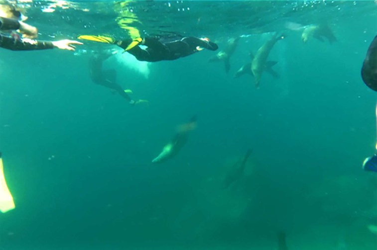 swimming-with-sea-lions
