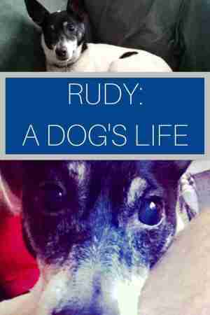 Rudy A Dog's Life Story