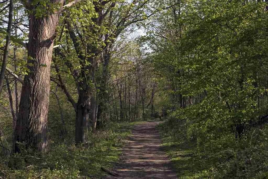 Rheinsteig Trail Germany