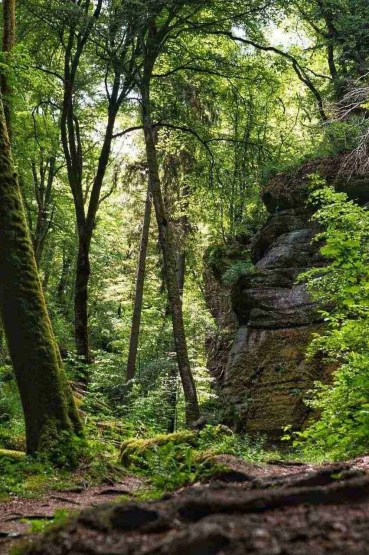 Mullerthal Luxembourg Hiking Trail