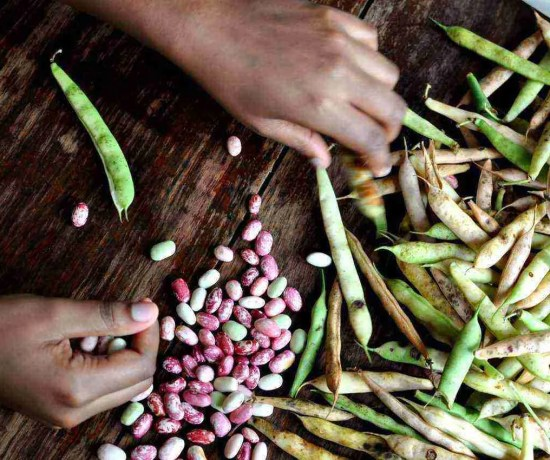 Shelling Beans Uganda Food