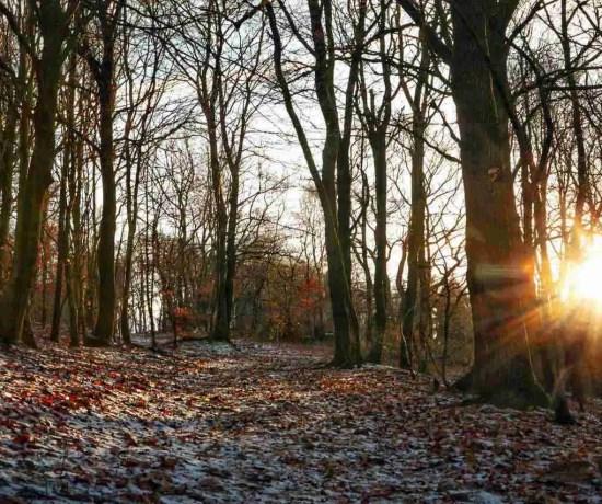 Hermannshoehen Hiking Trail in Winter