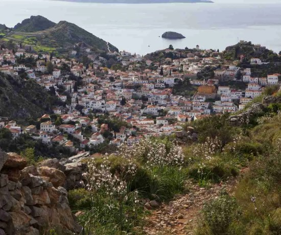 Hydra From Hiking Trail
