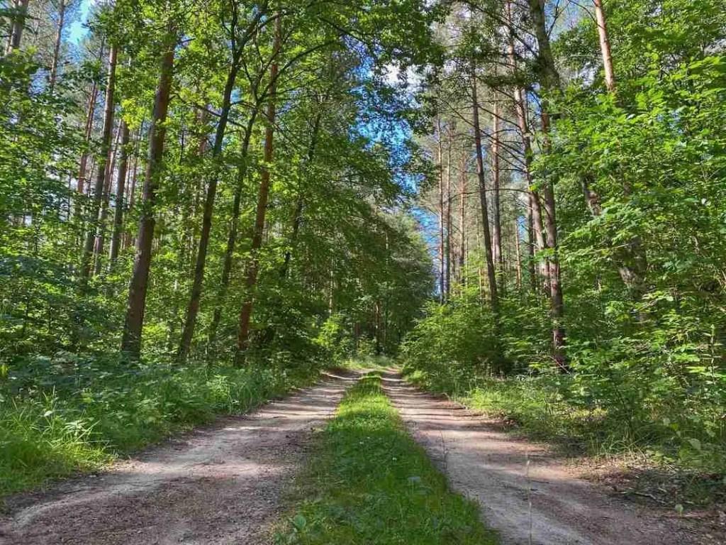 Märkischer Landweg Trail