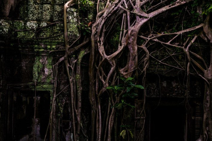 Cambodian temple roots