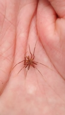 Sea Spider