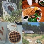 Instagram Lately: Farms, Fireworks & Freedom Ringing