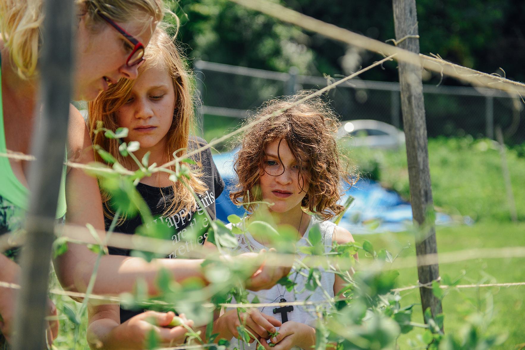 Hazelwood YMCA Garden by Quelcy 08
