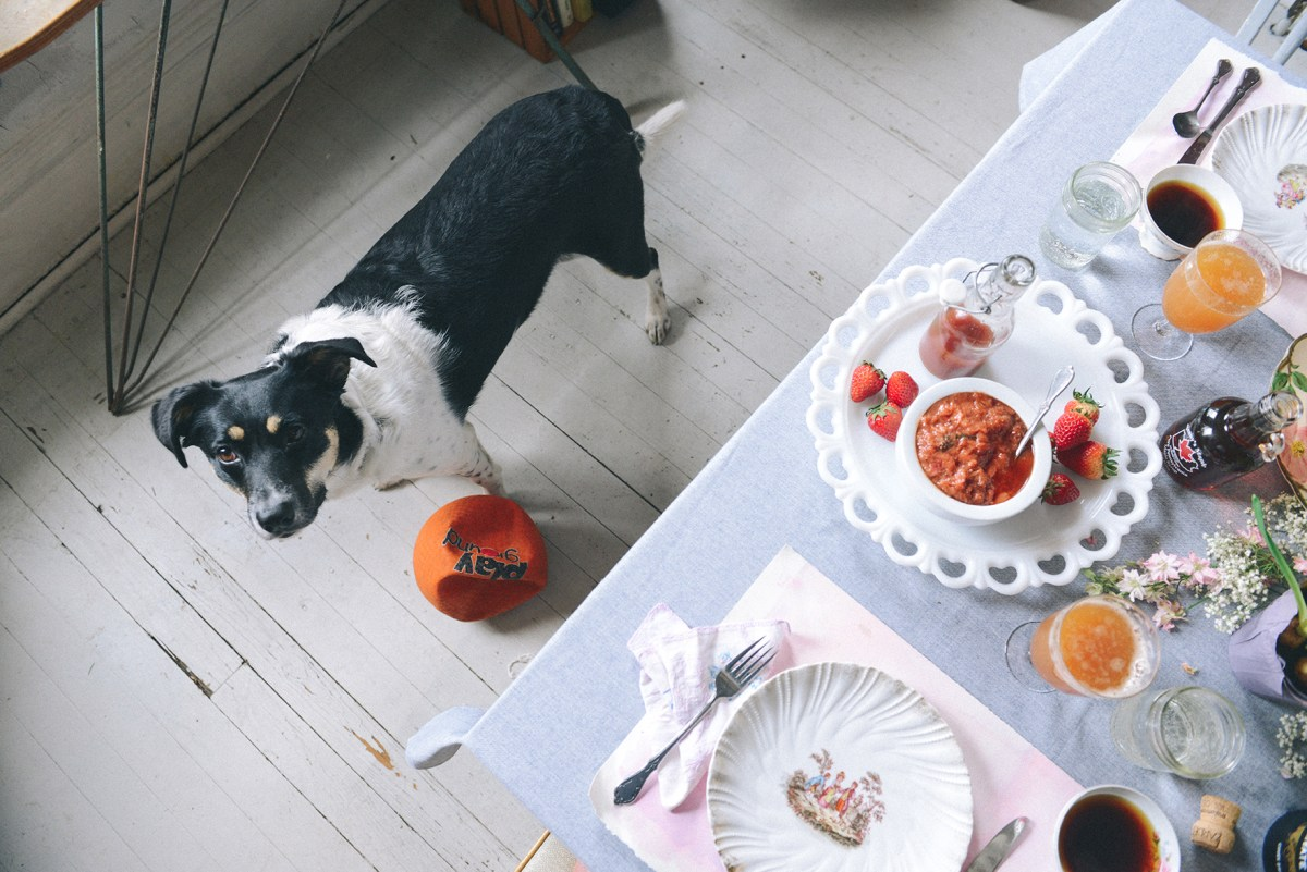Homemade Grain-Free Dog Treats for Julep's 3rd Birthday - With The
