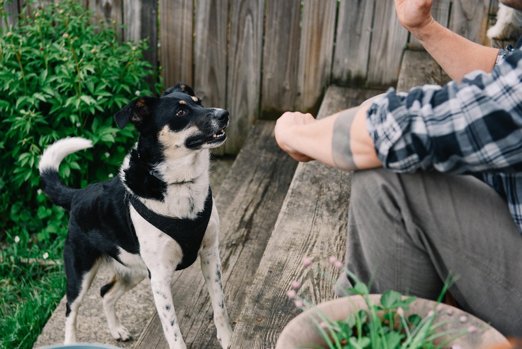 How To Make Dogs Bones Stronger