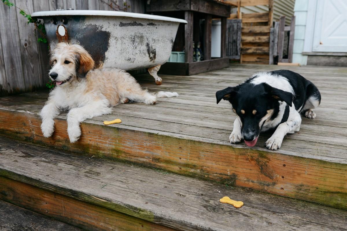 Homemade Grain-Free Dog Treats // www.WithTheGrains.com