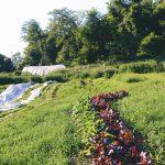Hazelwood Urban Farms Season 3 | Early Summer Harvest