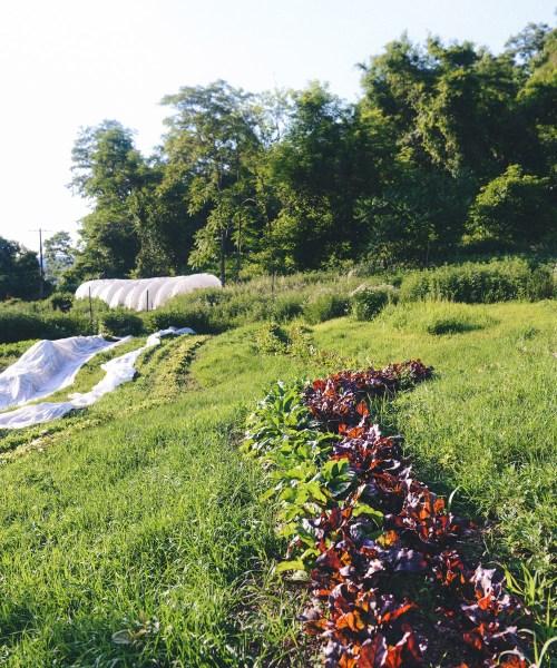 Hazelwood Urban Farms Season 3 | Early Summer Harvest // www.WithTheGrains.com
