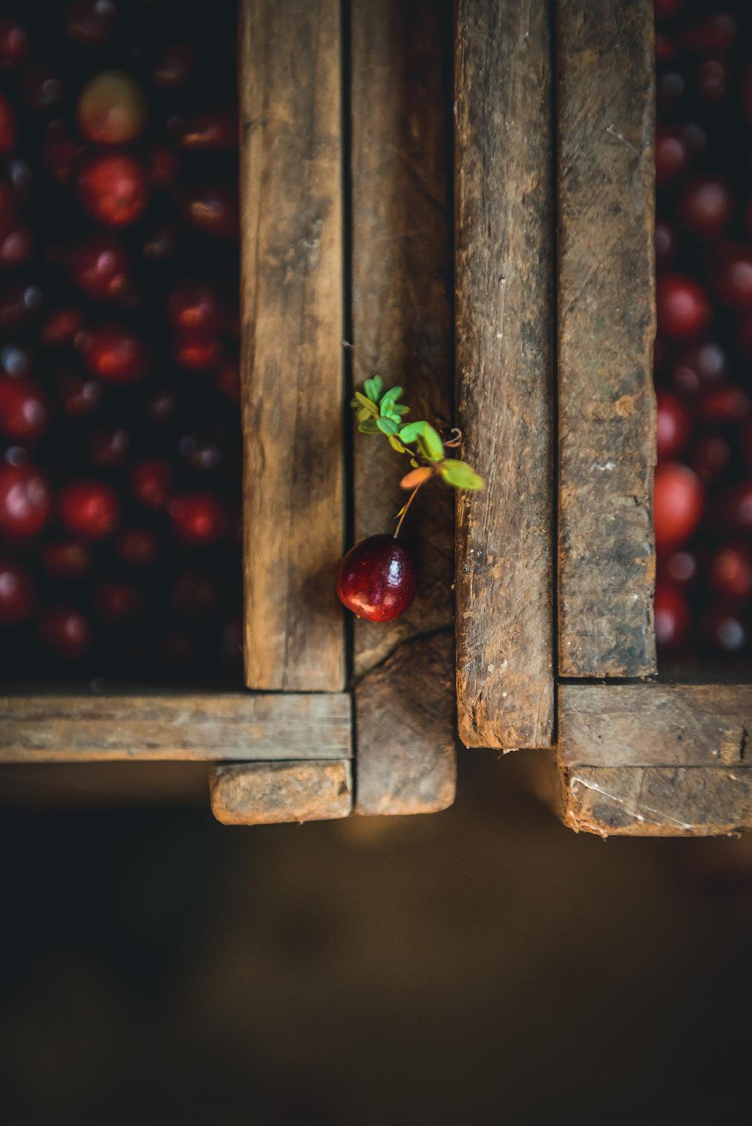 A Massachusetts Cranberry Harvest // www.WithTheGrains.com