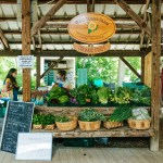 The Ithaca Farmer's Market