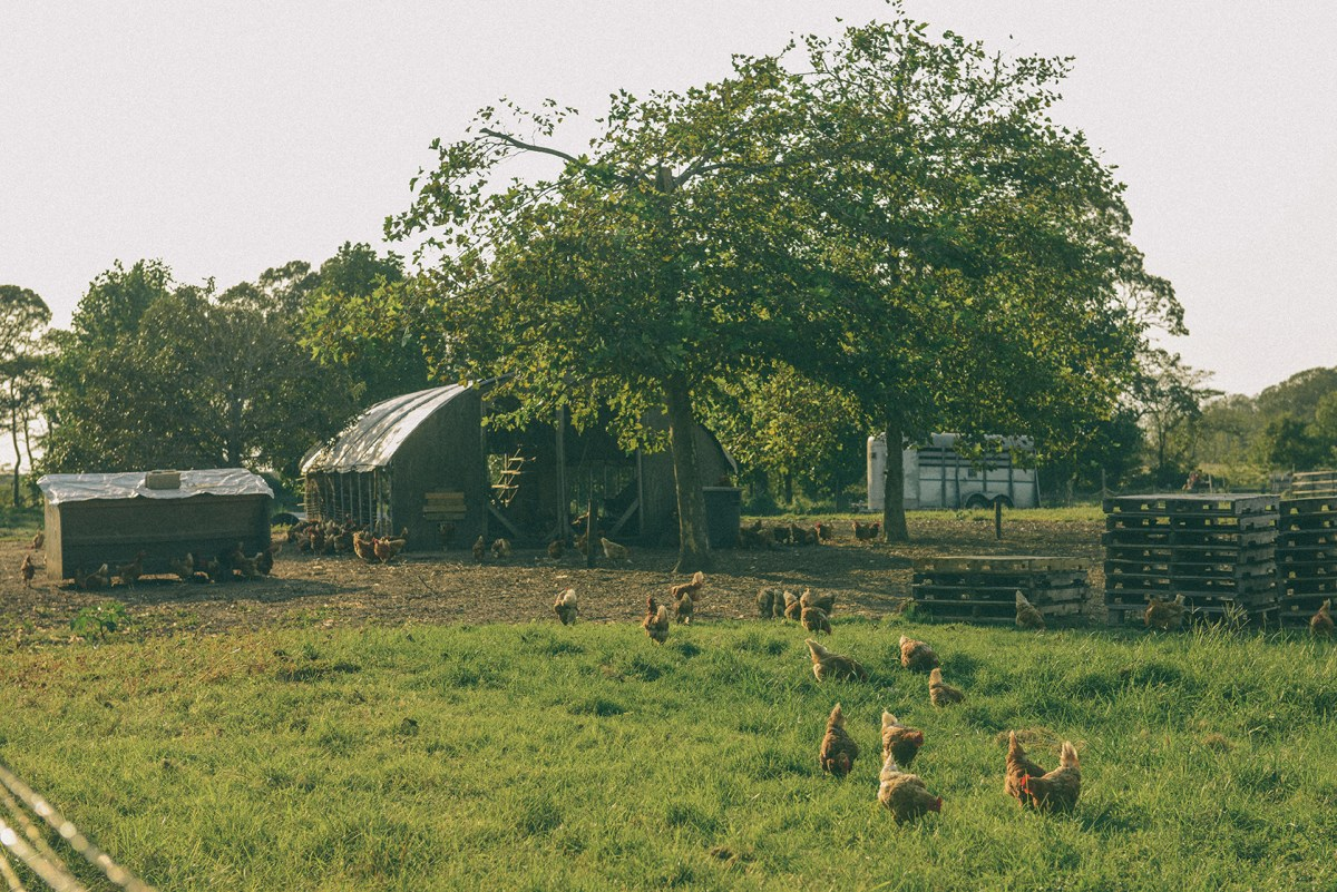 Chicken Coops // www.WithTheGrains.com