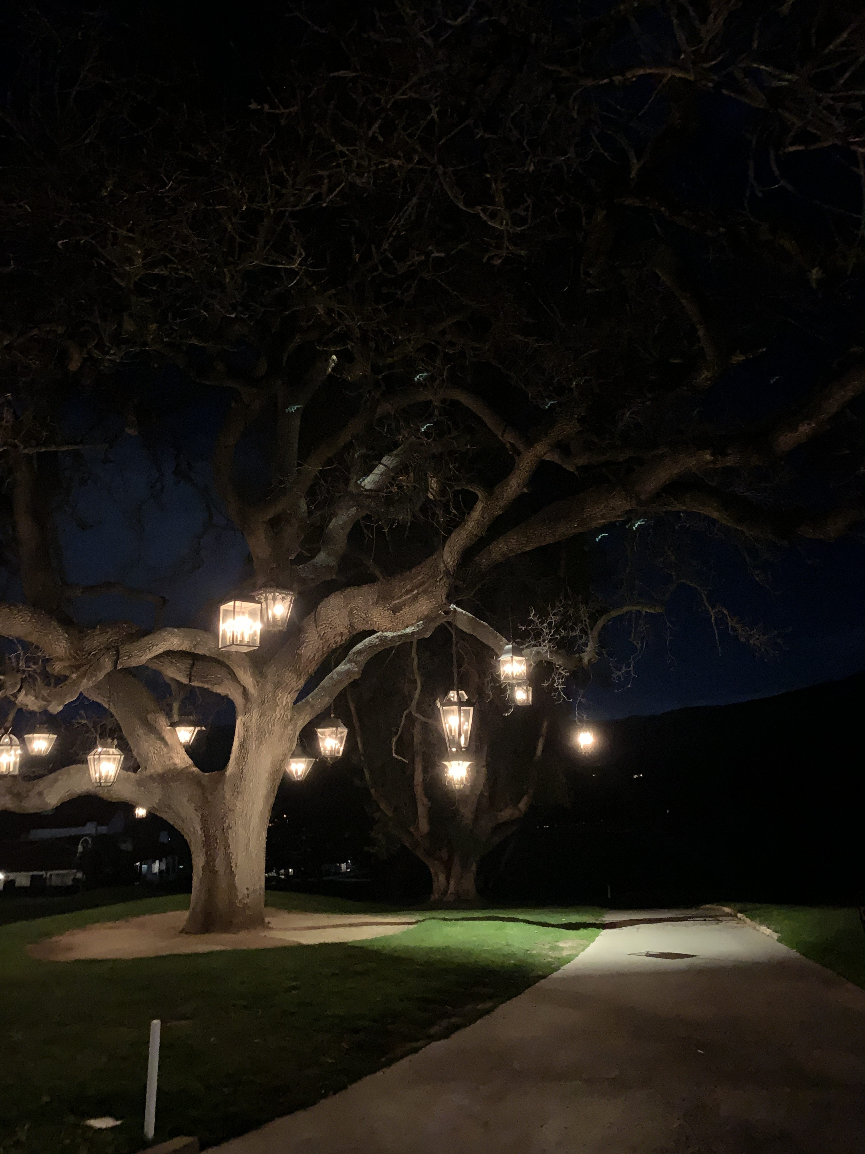 Ojai Valley Inn tree at night