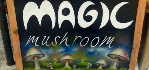 Magic Mushrooms in Bali 1