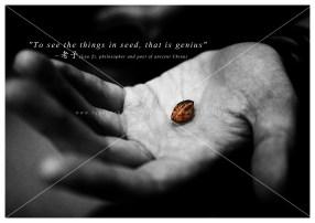 slive67_seed