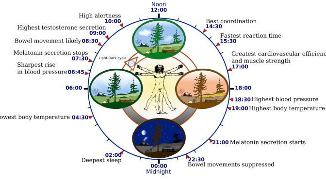 นาฬิกาชีวิตประจำวัน (Circadian Rhythm)
