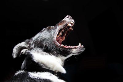 queens dog bites attorney